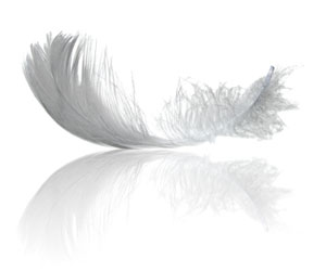 White Swan Wing Feather