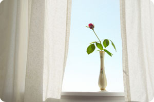 curtains and a rose