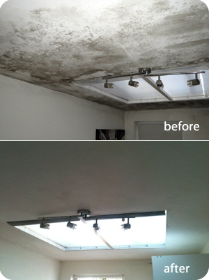 black mould removal service in London